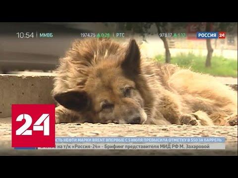 Собачья преданность: пес