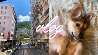 홍콩 직장인 브이로그 | 트램타고 동네 관광, 어마무…