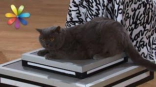 Как похудеть коту? Тестдрайв гаджетов от ветеринара – Все буде добре. Выпуск 989 от 27.03.17