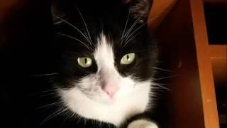 ЧЕРНО БЕЛЫЙ кот СТЁПКА 22