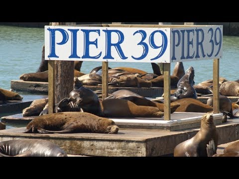 Pier 39 Attraction Pass