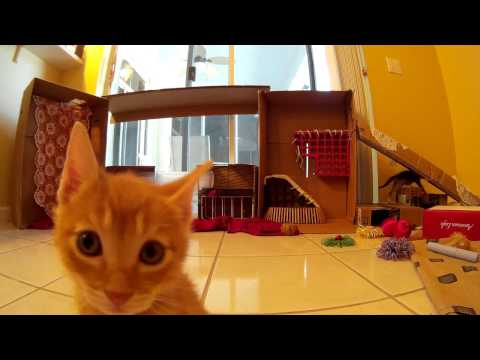 19 Minutes of Candid Video - Foster Kittens Playing on their Obstacle Course - 5 Weeks Old