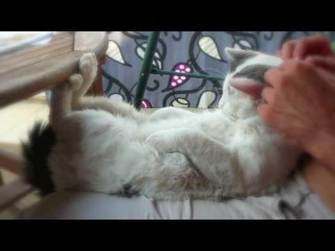 I'm not the Box cat Maru… I am Matso – the Dog Cat! But I'm very smart too!