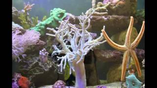Singularia Leather Finger Coral Timelapse