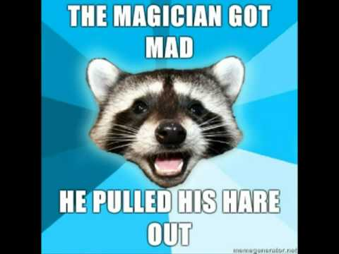 pun racoon collection ocremix music youtube
