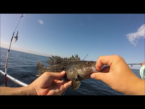 Deep Sea Fishing In Ocean City, Maryland For Black Sea Bass