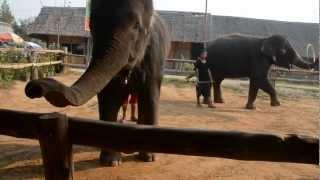 Dancing Elephants - Gangnam Style -  Thailand - 2013 02 26