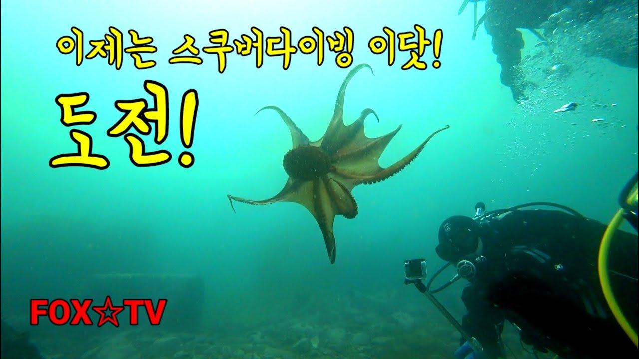 도전! 스쿠버다이빙 첫입수/오픈워터-FOX☆TV