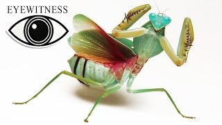 EYEWITNESS | Insect