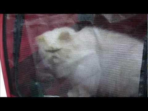 Cat Fancier