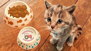 ПРИКЛЮЧЕНИЕ МАЛЕНЬКОГО КОТЕНКА мультфильм про котят Радугарог мультик для детей мультики на #ММ