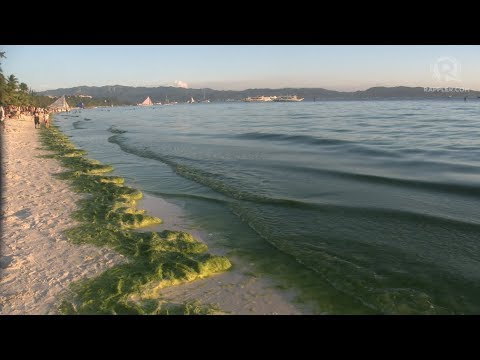 WATCH: Algae on Boracay's shores
