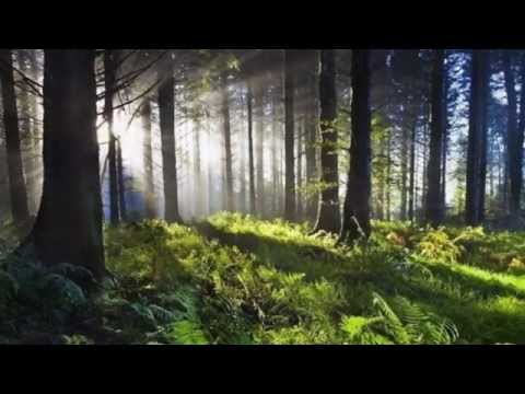 A Fair Meadow (Music for Celtic Harps) - Helen Davies & Kim Skovbye