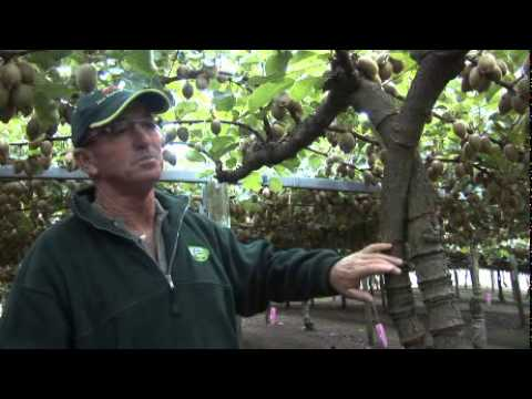 ZESPRI Kiwifruit growers Don and Judy Hyland