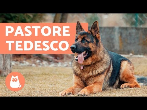 Pastore Tedesco: documentario - Caratteristiche e addestramento del Pastore Tedesco