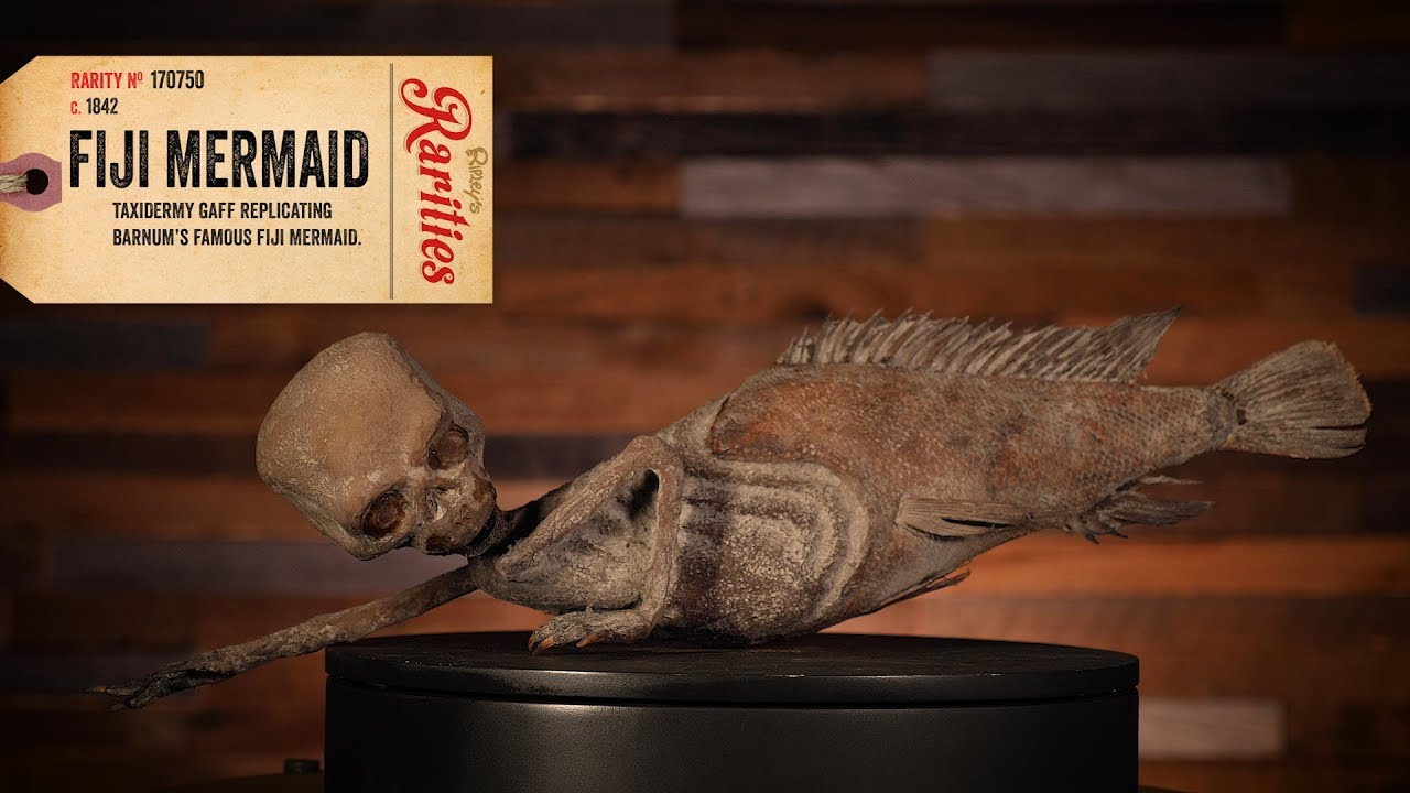 What Exactly Is A Fiji Mermaid