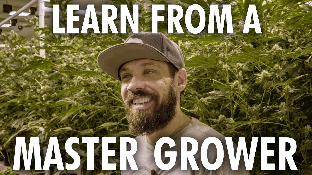 Cannabis Grow Op Tour - Learn from a Master Grower