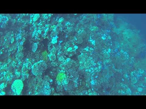 Fiji Purple Garden Dive pt 2/3