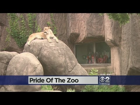 Lincoln Park Zoo Renovations Planned