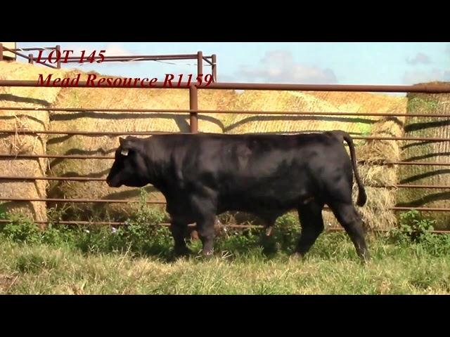 Mead Angus Lot 145