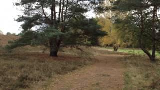 Im Wald und auf der Heide 02