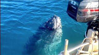 Unbelievable Whale encounter Strangest behaviour ever EP.493