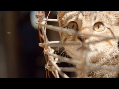 This Community Is Overrun With Feral Cats | Dr. Jeff: Rocky Mountain Vet