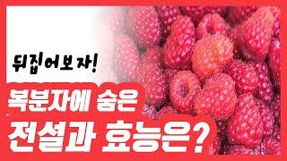 [건강식품 G(굿)]알고 먹으면 더 좋다! 복분자에 숨…
