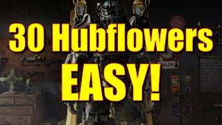 Fallout 4 Gameplay - How to Get 30 Hubflowers EASY Psycho ingredient, 25 damage