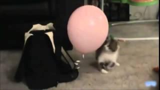 Коты и кошки лопают шарики