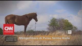 Mengembara di Pulau Seribu Kuda | Inside Indonesia