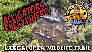 While You're in Florida! Biking the Lake Apopka Wildlife Trail