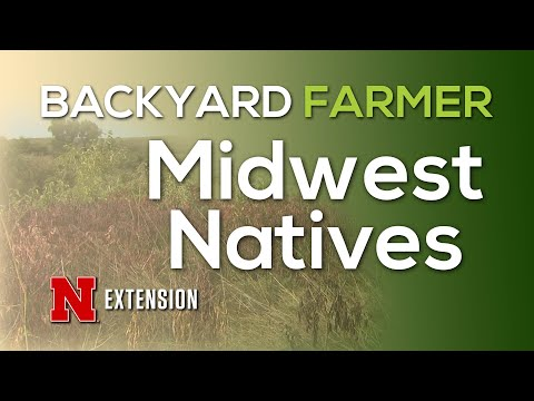 Midwest Natives