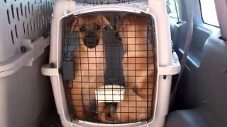 HSGB Operation Puppylift  Aug. 15 2011