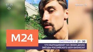 Что выращивают на своих дачах звезды российского шоу-бизнеса - Москва 24