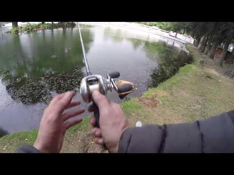 Lobinas en Chautla Puebla, salida express, Quick bass fishing @ Chautla Puebla
