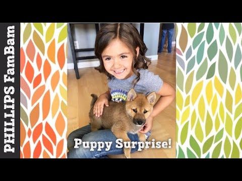 BIRTHDAY SURPRISE PUPPY | SHIBA INU PUPPY SURPRISE | PHILLIPS FamBam Vlogs