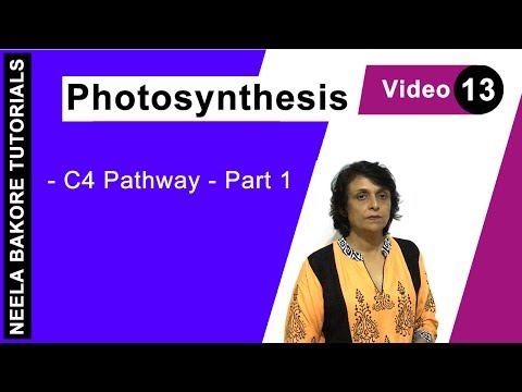 Photosynthesis - C4 Pathway - Part 1
