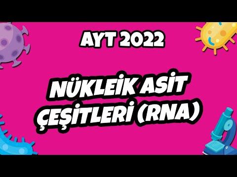 AYT Biyoloji - Nükleik Asit Çeşitleri (RNA) | AYT Biyoloji 2021 #hedefekoş