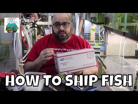 How To Ship Fish The Right Way