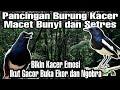 Pancingan Kacer Gacor Full Isian Mewah Istimewa  Mp3 - Mp4 Download