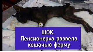 Слабонервным не смотреть: Пенсионерка из Ижевска развела в квартире кошачью ферму