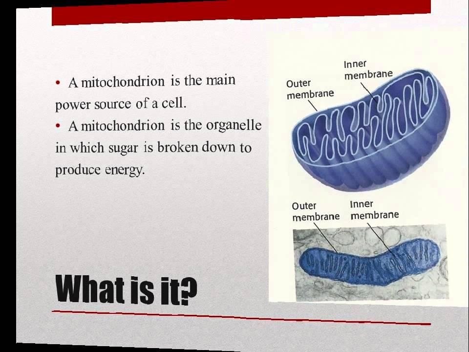 Mitochondria Presentation