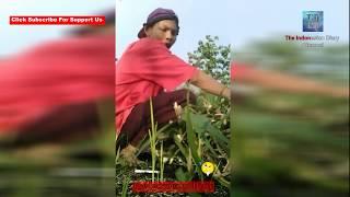 KOCAK..! Orang Jawa ini Membuat Video Tutorial Ngarit, Bikin Ngakak..