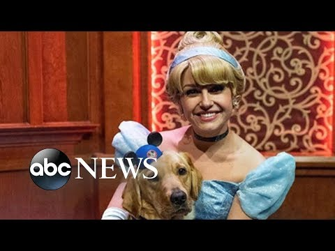 Chino - WATCH: Service dog meeting Cinderella gives us all the feels