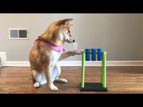 A Very Difficult Dog Intelligence Test.