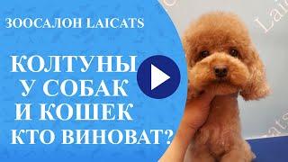 видео Колтуны у кошки — как избавиться?