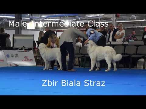EDS 2018-Tatra Shepherd Dog.