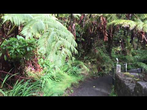 Thurston Lava Tube Trail in Hawaii Volcano National Park