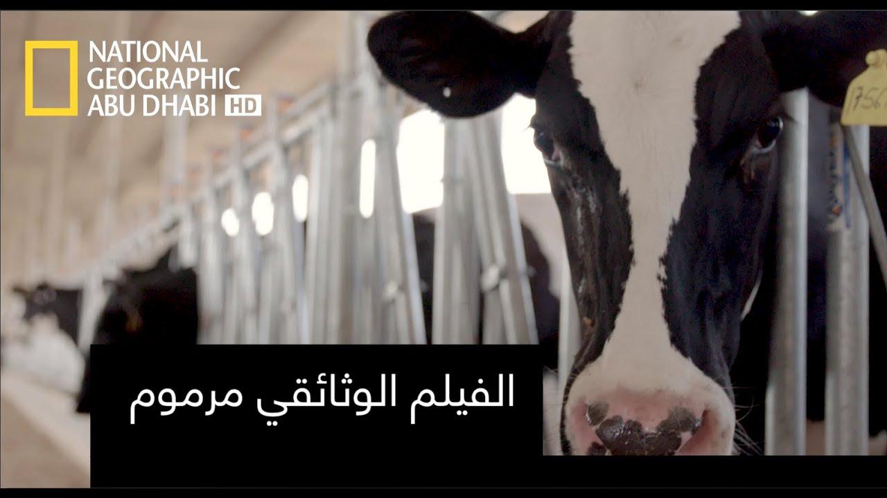 ناشونال جيوغرافيك أبوظبي| للعرض الترويجي الفيلم الوثائقي مرموم